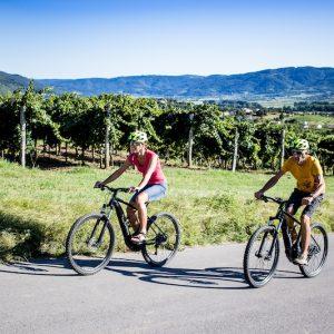 Mož in žena kolesarita skozi vinograde Vipavske doline z izposojenimi električnimi kolesi.